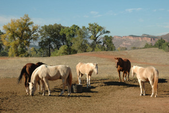Our horses enjoying the afternoon sun.