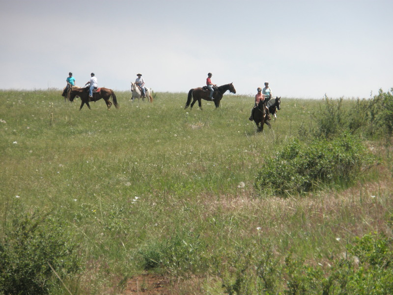 Line of horses coming down the hill at the end of a trail ride on our ranch