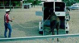 Joe loading a horse in a trailer from the end of a long rope.