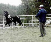 Joe working with a pinto horse in a round pen.
