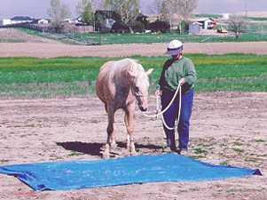 Horse walking over a tarp